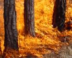 Огонь лес