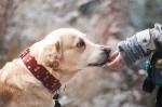 dog-1861839_960_720
