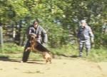 Чемпионат по многоборью кинологов МВД России